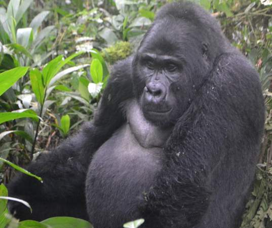 Prime Minister Rugunda Woos Tourists To Uganda