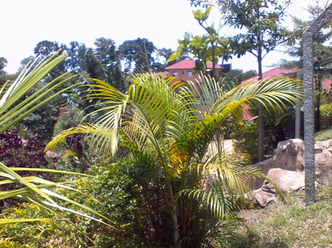Kigezi Forest Cottages is true definition of natural environment