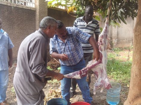 Oryema looks on as Egyptian friends slaughter an animal
