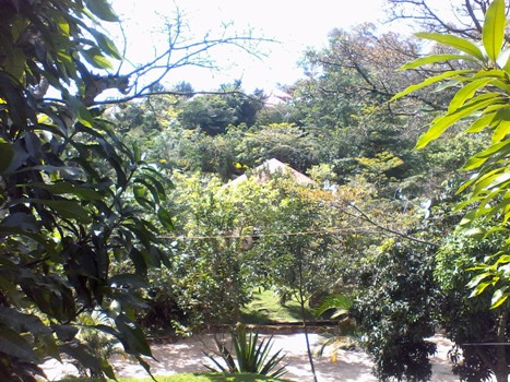 The cottages are surrounded by beautiful green plants and forest